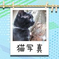 人気ブログ猫写真へ