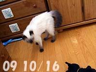 2009-10-16---2.jpg