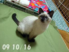 2009-10-16---4.jpg