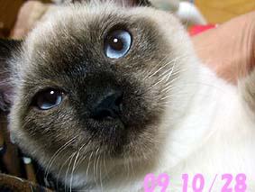 2009-10-28---1.jpg