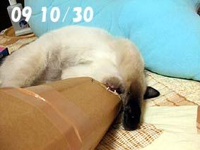 2009-10-30---2.jpg