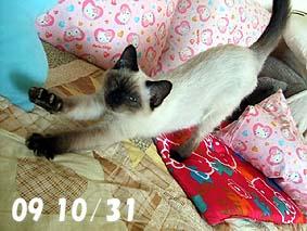 2009-10-31---1.jpg