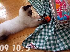 2009-10-5---1.jpg