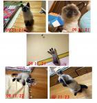 2009-11---4.jpg