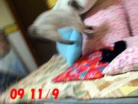 2009-11-10---1.jpg