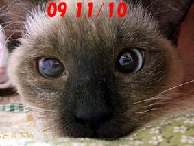 2009-11-10---4.jpg