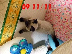 2009-11-11---1.jpg