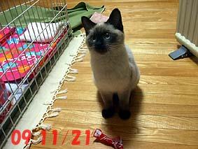 2009-11-21---1.jpg