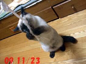 2009-11-23---2.jpg