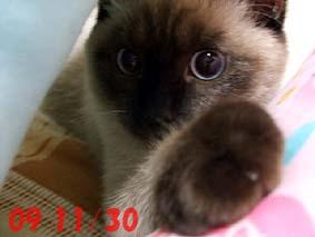 2009-11-30---1.jpg