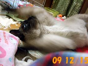 2009-12-15---2.jpg
