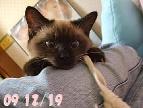 2009-12-19---1.jpg