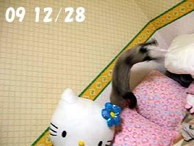 2009-12-28---1.jpg