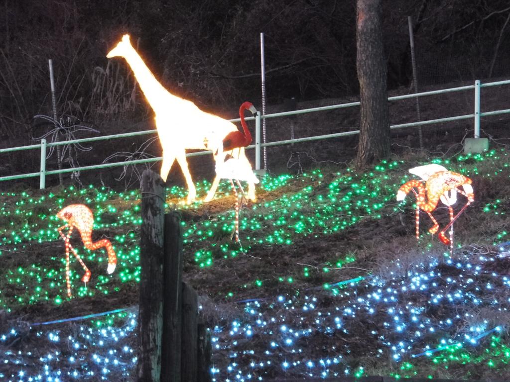 光の動物園_1