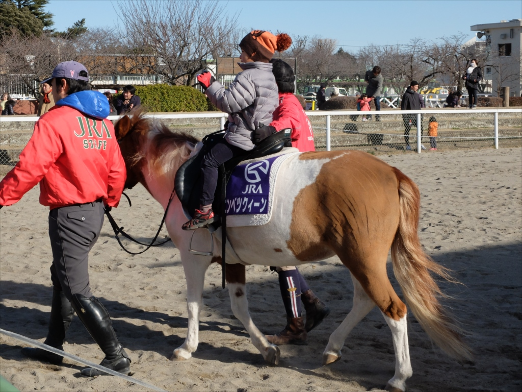 ポニーの体験乗馬_4