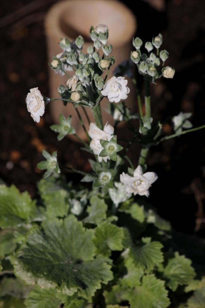 これは何の花だろう_1
