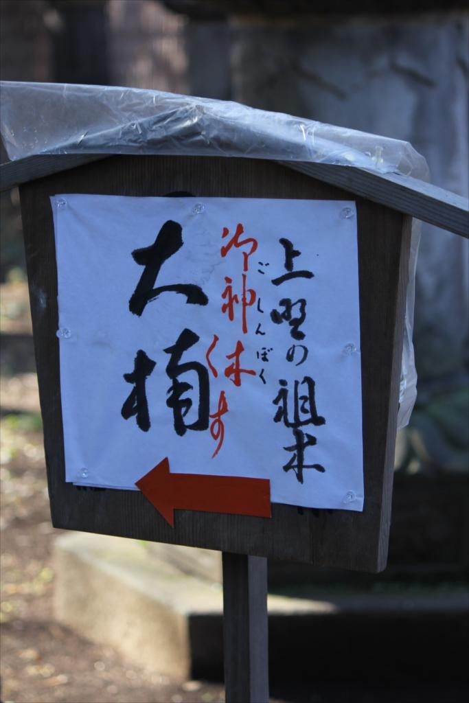 上野の祖木といわれる御神木『大楠』_1