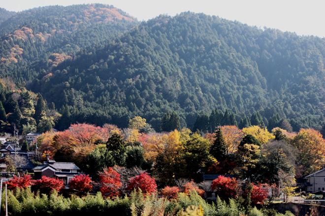 ohara-s10-3696.jpg