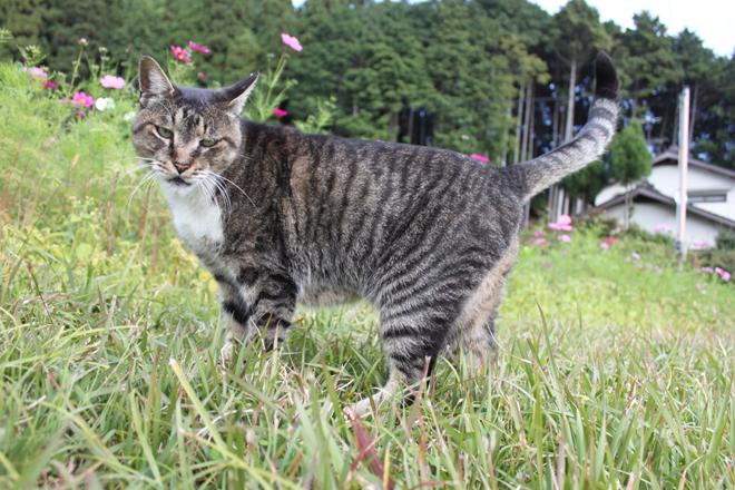 oohara-s10-7827.jpg
