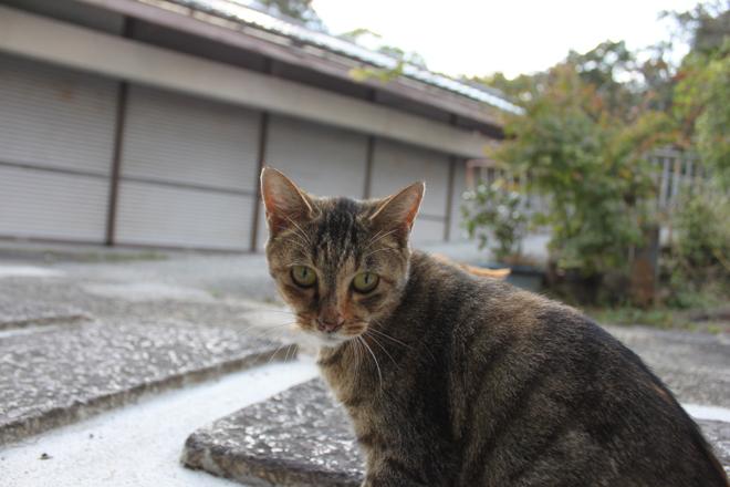 oohara-s10-7920.jpg