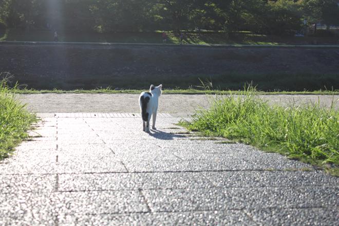 s10-6415shiro.jpg