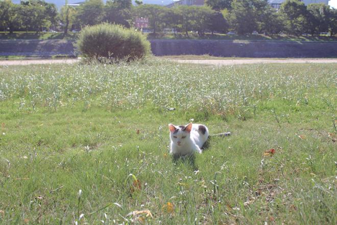 s10-7594shiro.jpg