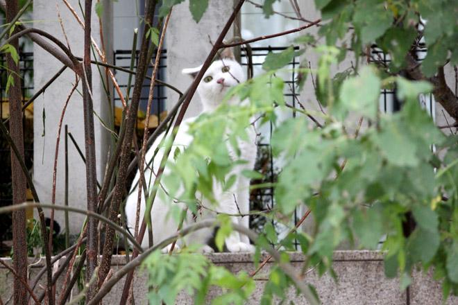s10-shiro-a2486.jpg