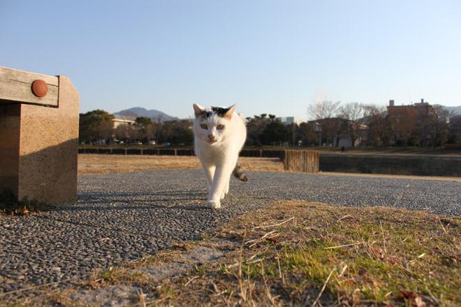 s10-shiro-a7516.jpg