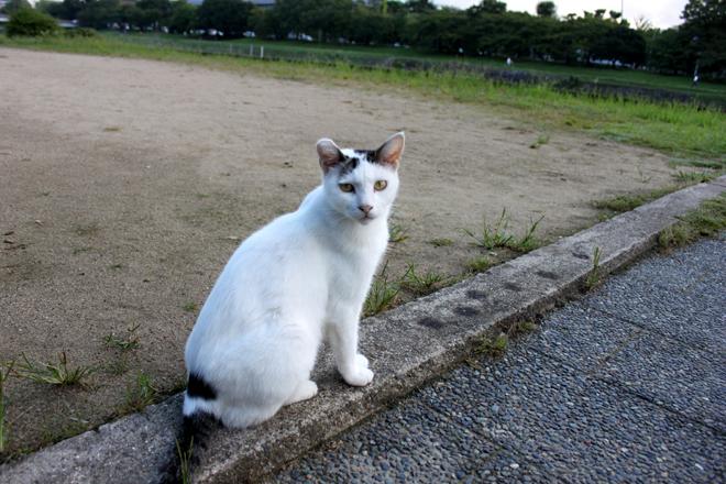 s10-shiro2-0045.jpg