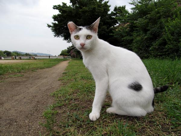s10-shiro8154.jpg