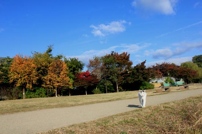 shiro-s10-f0673.jpg