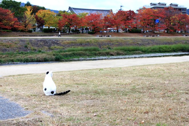 shiro-s10-f0890.jpg