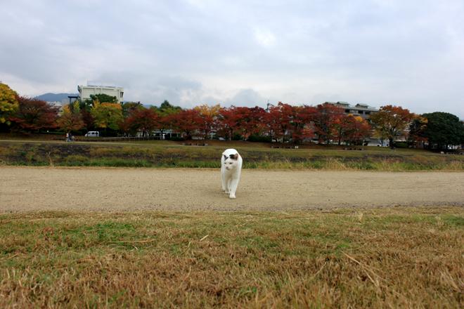 shiro-s10-g9937.jpg