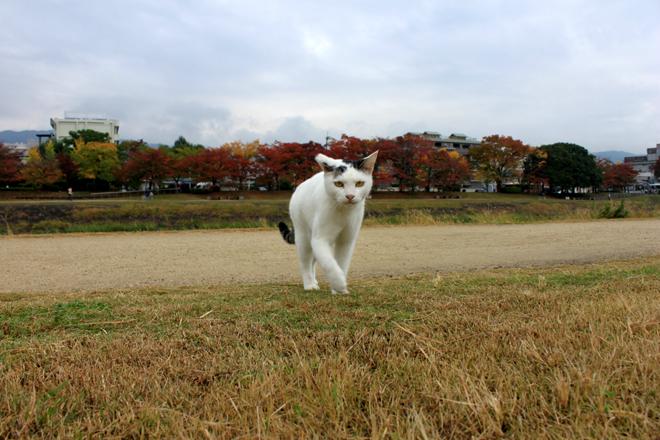 shiro-s10-g9939.jpg