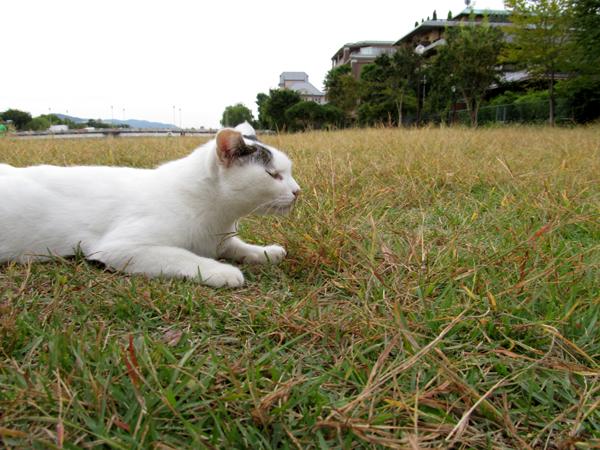 shiro9083-s10.jpg