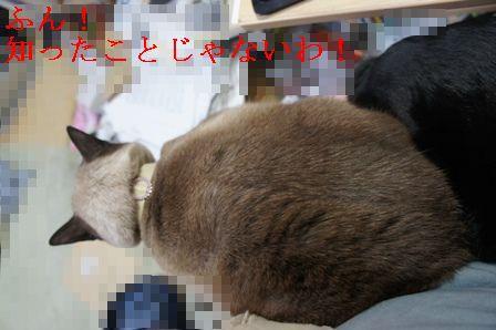 DSC02993_20101122143130.jpg