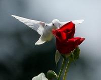 AlbinoHummingbirdinVirginia6アルビノハチドリ