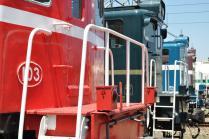 Daruma800 Exp.