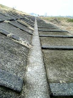長良川沿い徒歩通勤_開拓ルート_01