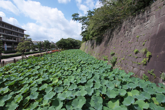 20110816_turumaru_castle-11.jpg