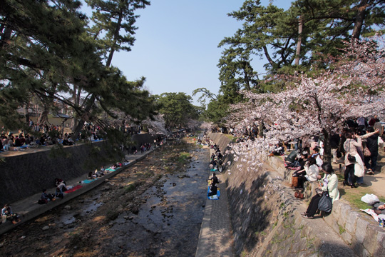 20120408_shukugawa_park-01.jpg