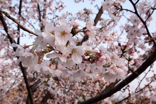 20120408_sumauwa_park-07.jpg