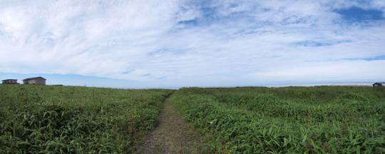 20120814_onnemoto_chashiato-07.jpg