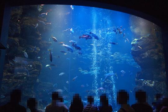 20120902_kyoto_aquarium-03.jpg