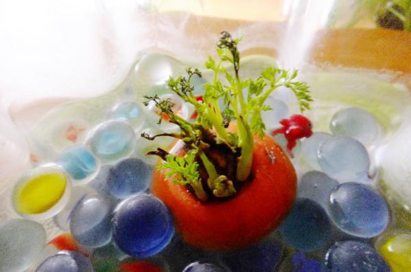 にんじん水栽培