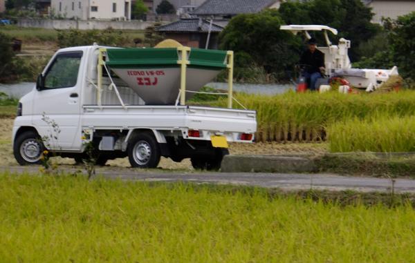 晩生稲刈り04