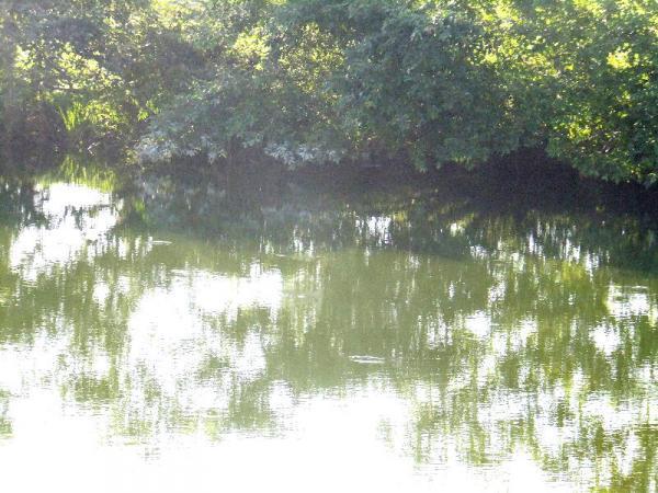 初夏の水面02