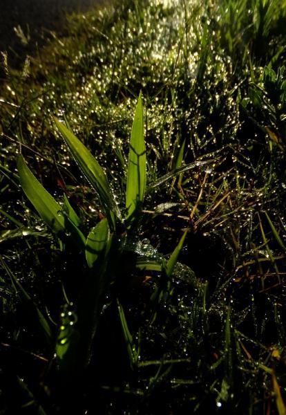 雨上がり02