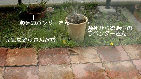 100512_4939.jpg