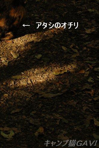101103_9472a.jpg